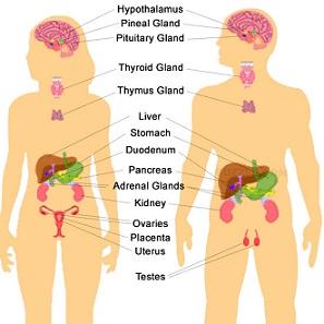 Organ and Liver Detox