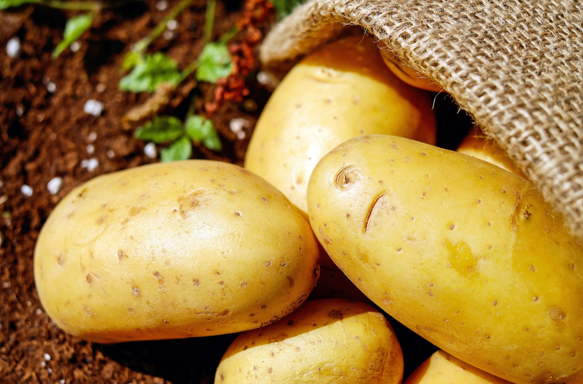 Potatoes for gut health and weight loss: The Potato Hack